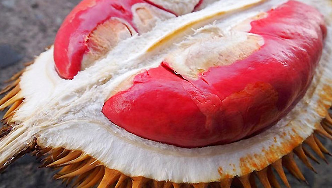 Get The Best Red Prawn During Singapore Online
