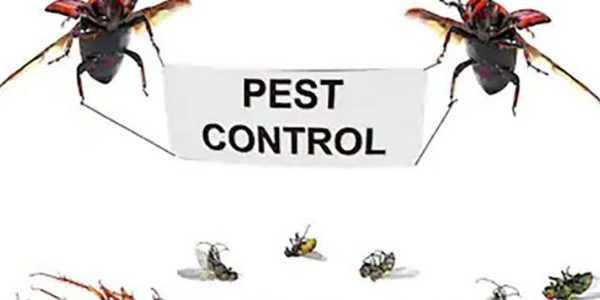 Pest control services – questions to rise