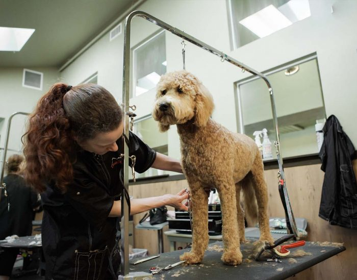 Most of the customers are satisfied with the services offered by the mobile dog groomers.