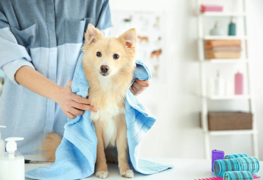 What does pet insurance cover, Fort Lauderdal groomers clear guidance ?